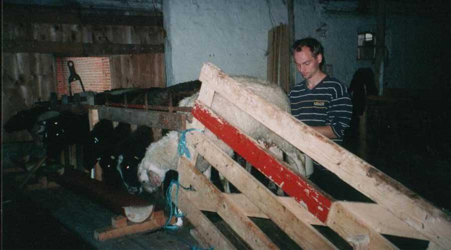 Friesische Schafskäserei mit Hofladen nahe St. Peter-Ording